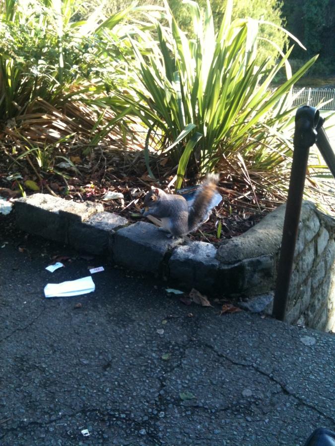 squirrel pic 1