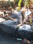 squirrel pic 6