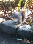 squirrel pic 6