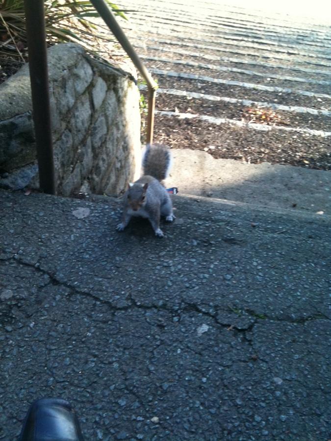 squirrel pic 2