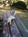 squirrel pic 4