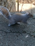 squirrel pic 5