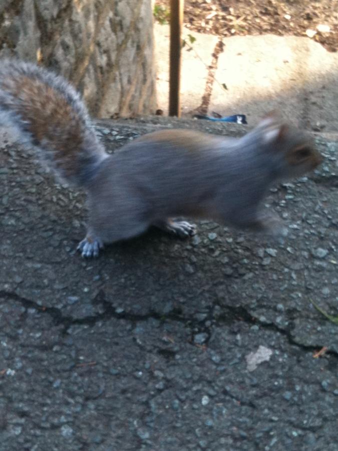 squirrel pic 5